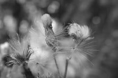 Verblassene Blumen Stockfoto