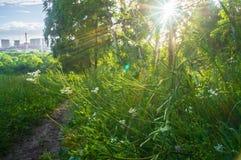 Verblindend stralend zonlicht door vers weelderig groen van de zomerbos stock foto