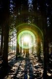 Verblindende gloed in donker bos Royalty-vrije Stock Foto