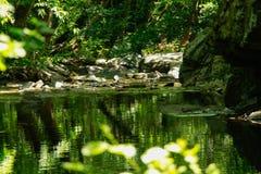 Verbogene Bäume über Gebirgsfluss Lizenzfreies Stockbild