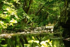 Verbogene Bäume über Gebirgsfluss Stockfotos