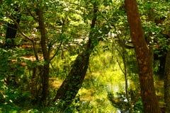 Verbogene Bäume über Gebirgsfluss Stockfotografie
