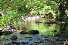 Verbogene Bäume über Gebirgsfluss Lizenzfreies Stockfoto
