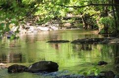 Verbogene Bäume über Gebirgsfluss Stockbild