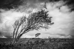 Verbogene Bäume Stockfotos