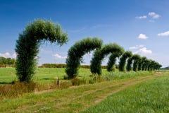 Verbogene Weidebäume in einer Zeile in der Landschaft Lizenzfreies Stockfoto
