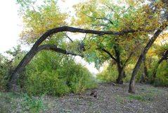 Verbogener Baum Stockfotos