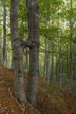 Verbonden bomen Stock Afbeelding