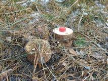 verborgen geocache in het bos Stock Afbeeldingen