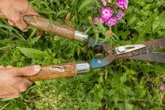 Verborgen Gevaren om Te tuinieren royalty-vrije stock fotografie