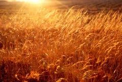 Verborgen in het gras Royalty-vrije Stock Fotografie