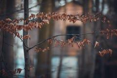 Verborgen Huis door het bos stock afbeeldingen