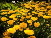 Verborgen Japanse Bloemtuin stock afbeelding