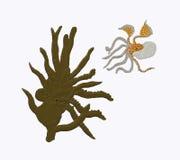 Verborgen octopus royalty-vrije stock afbeelding