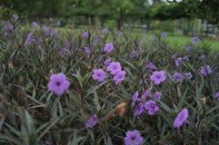 Verborgen purpere bloem in het schemerige licht royalty-vrije stock foto's