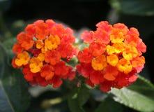 Verborgen schoonheid 5 Royalty-vrije Stock Afbeeldingen