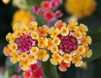 Verborgen schoonheid 6 stock fotografie