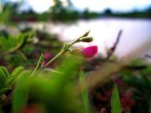 Verborgen schoonheid in het gras royalty-vrije stock afbeeldingen