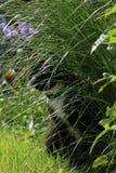 Verborgen zwart-witte kat Stock Foto's