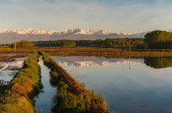 Vercelli rice fields. The wet rice fields and reflection of the Alps in Vercelli, Italy Royalty Free Stock Photography