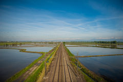 Vercelli rice fields. The wet rice fields of the Vercelli region of Italy Stock Photo