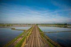 Vercelli ricefält Arkivfoto