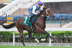 Vercingetorix avec Anthony Delpech chez Sha Tin Racecourse, Hong Kong Photo stock
