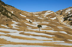 Vercors tree Royalty Free Stock Images