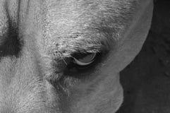 Verdacht hondoog Royalty-vrije Stock Afbeeldingen
