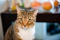 Verdachte kat stock foto