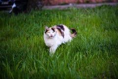Verdachte kat royalty-vrije stock foto