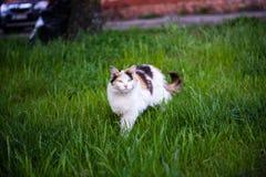 Verdachte kat royalty-vrije stock fotografie