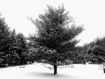 Verdad dura fría imagen de archivo libre de regalías