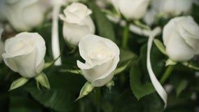 Verdaderas rosas blancas suaves como fondo, clouse-up fotos de archivo
