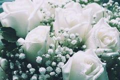 Verdaderas rosas blancas suaves como fondo filtro retro fotografía de archivo libre de regalías