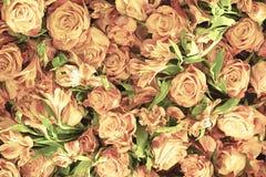Verdaderas rosas delicadas suaves como fondo neutral foto de archivo libre de regalías