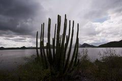 Verdammung im Sonora Lizenzfreies Stockbild