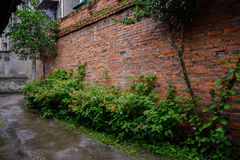 Verdant alley outside red-brick wall after summer rain Stock Image