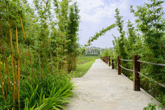 Verdant bamboo by path with handrails  in sunny summer Royalty Free Stock Photos