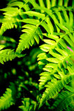 Verdant color. Here are ferns in the forest Stock Photo