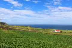A verdant field overlooking the ocean. A vibrant landscape alongside dramatic cliffs on the Portuguese island of Terceira under an azure sky. Terceira is the Stock Images