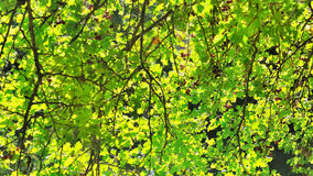 Verdant foliage Royalty Free Stock Images