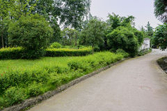 Verdant green along countryroad Stock Photos