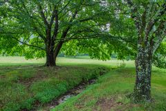 Verdant green meadow with trees in early summer Stock Photo