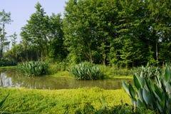 Verdant hout en aquatisch gras langs rivieroever in de zonnige zomer stock afbeeldingen