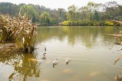 Verdant lake in sunny spring Royalty Free Stock Photo