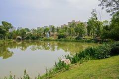Verdant lakeshore in city of sunny summer Stock Photos