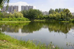 Verdant lakeside in modern city on sunny summer Royalty Free Stock Images