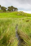 Northumberland Landscape With a Stream. A verdant landscape with a stream near Hadrian`s Wall in Northumberland in England Royalty Free Stock Images