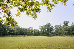 Verdant lawn in sunny morning Royalty Free Stock Image